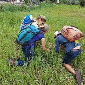 mountain+studies+institute-pine-needle-mountaineering.jpg