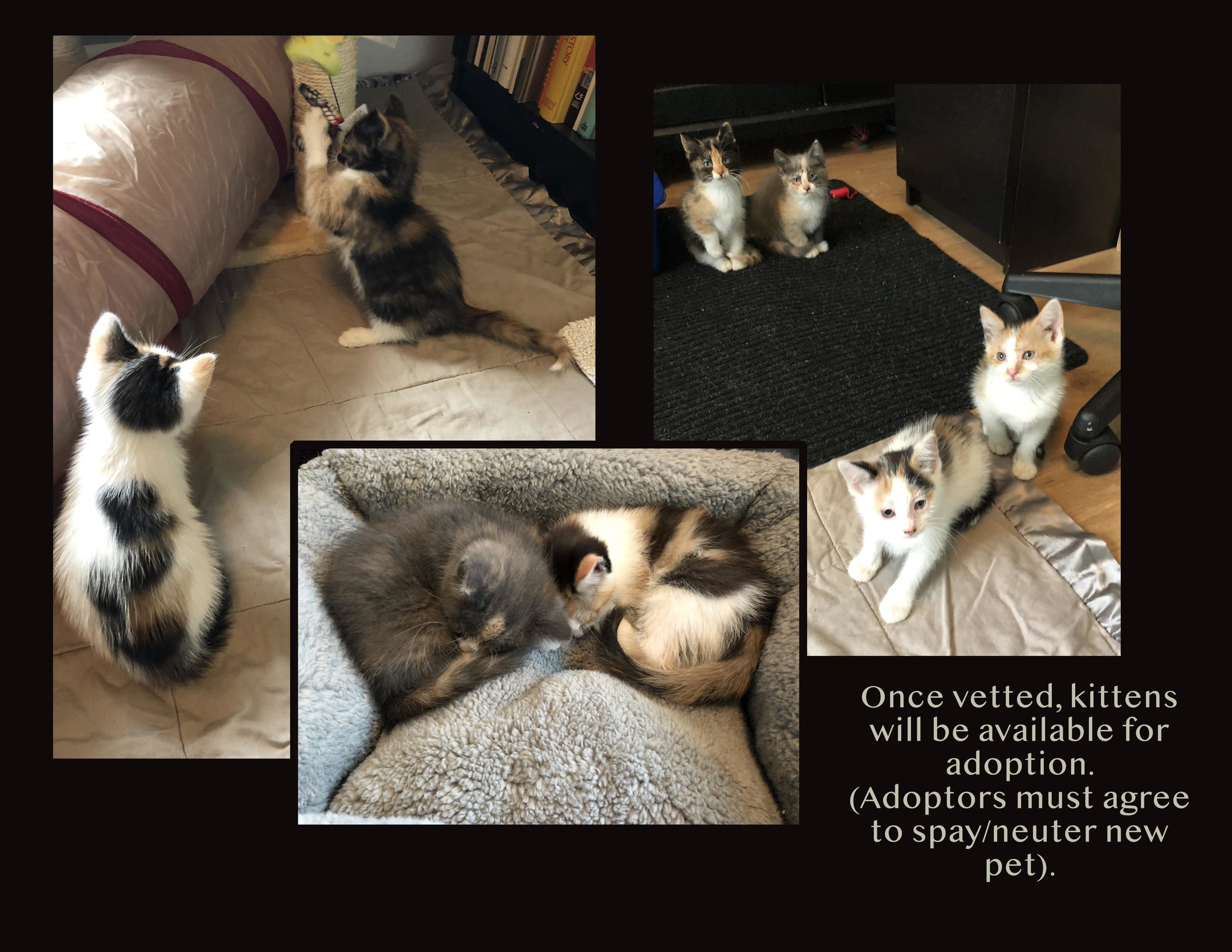 kittenpics.jpg