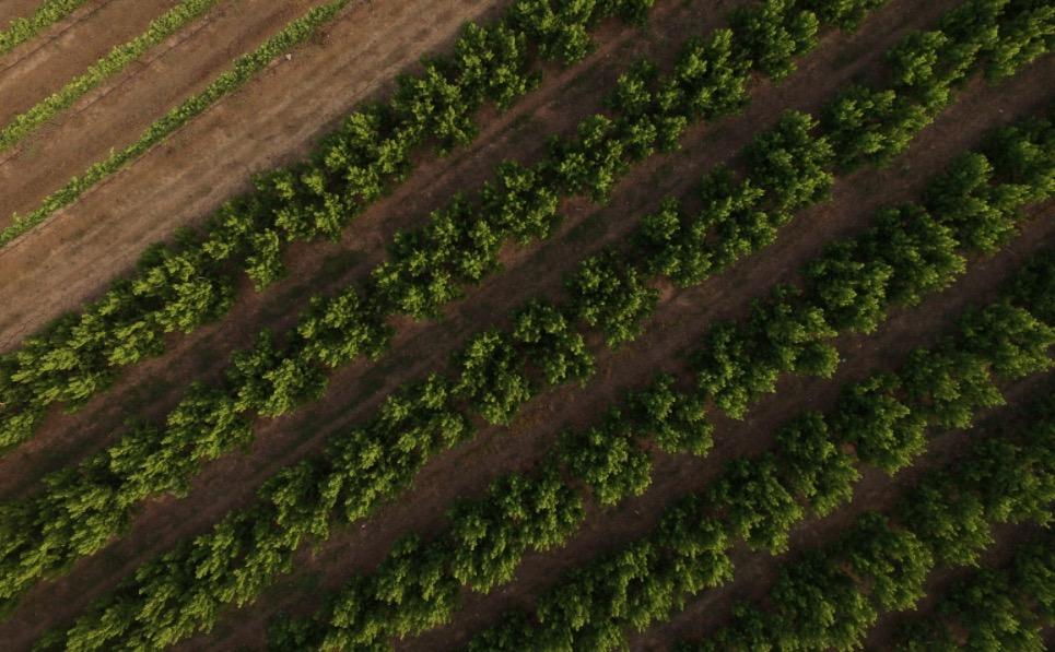 The green Yatir vineyard abuts the arid Negev Desert . Film still courtesy Yatir Winery.