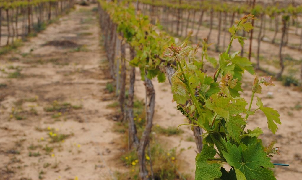 Rota Winery, Negev Desert. Photo by Katherine Martinelli  courtesy     Creative Commons    .