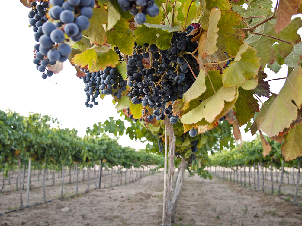 06_Solutions_P8014670-grapes_LOW.jpg