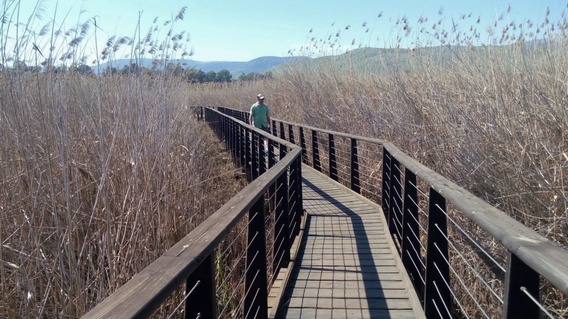 Walking in the Hula Nature Reserve. Photo by Jessica Halfin
