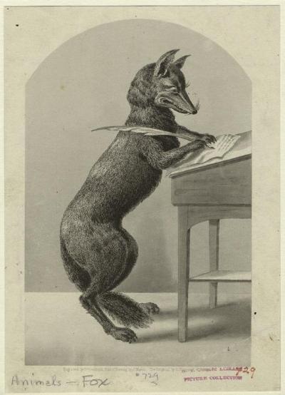 Fox Writing.jpg