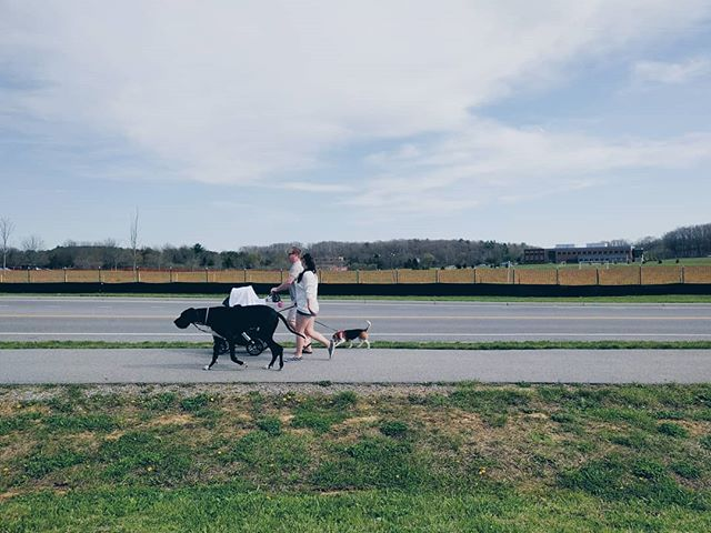 Something something horse dog joke. #vsco #dogs #reallife