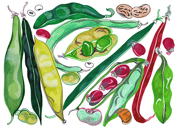Legumes <br> Cook Magazine in The Guardian