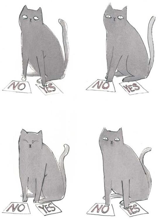 Decider Cat