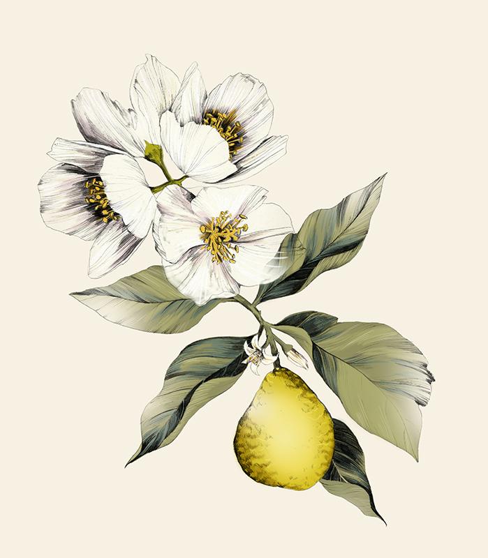 Jasmin Bergamot <br> Botanical Hand Cream