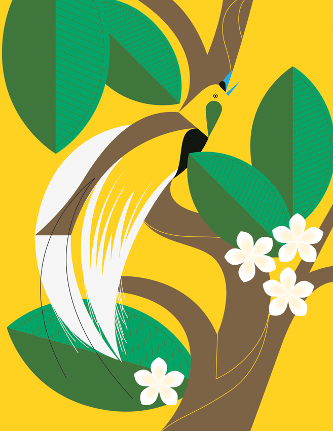 Yellow Bird Paradise