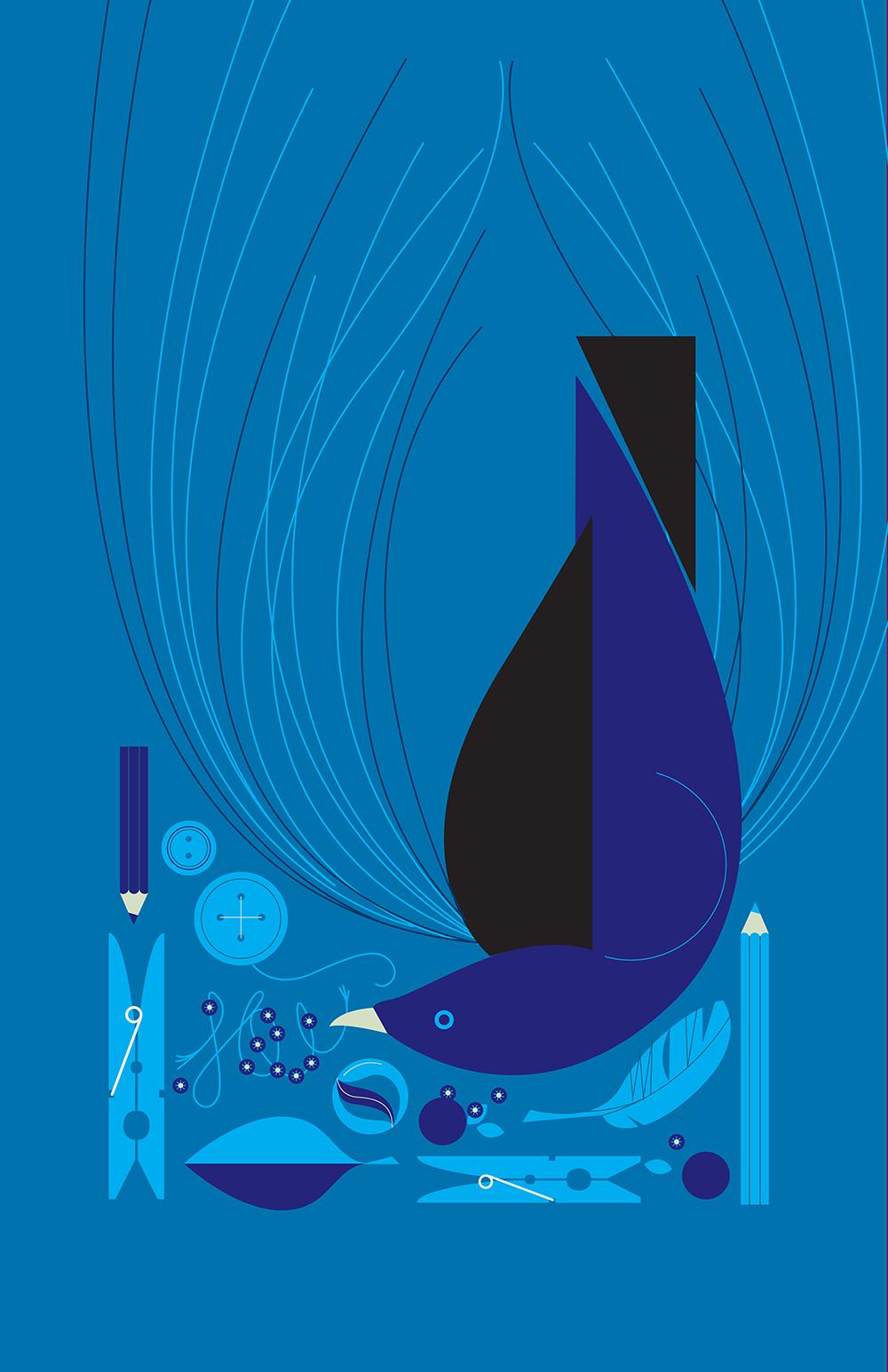 Blue Bowerbird