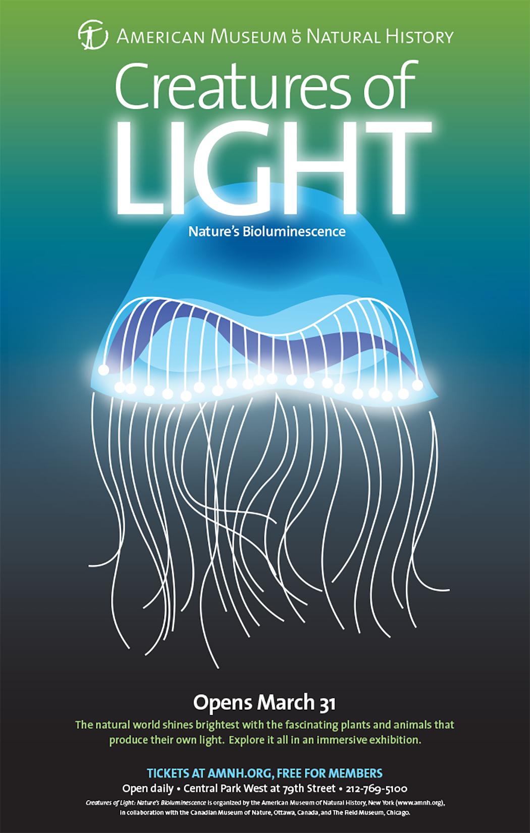 Jellyfish - American Museum & Natural History