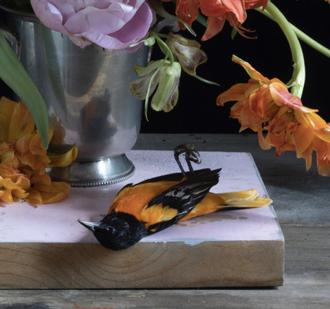 Detail:  Peonies and Baltimore Oriole