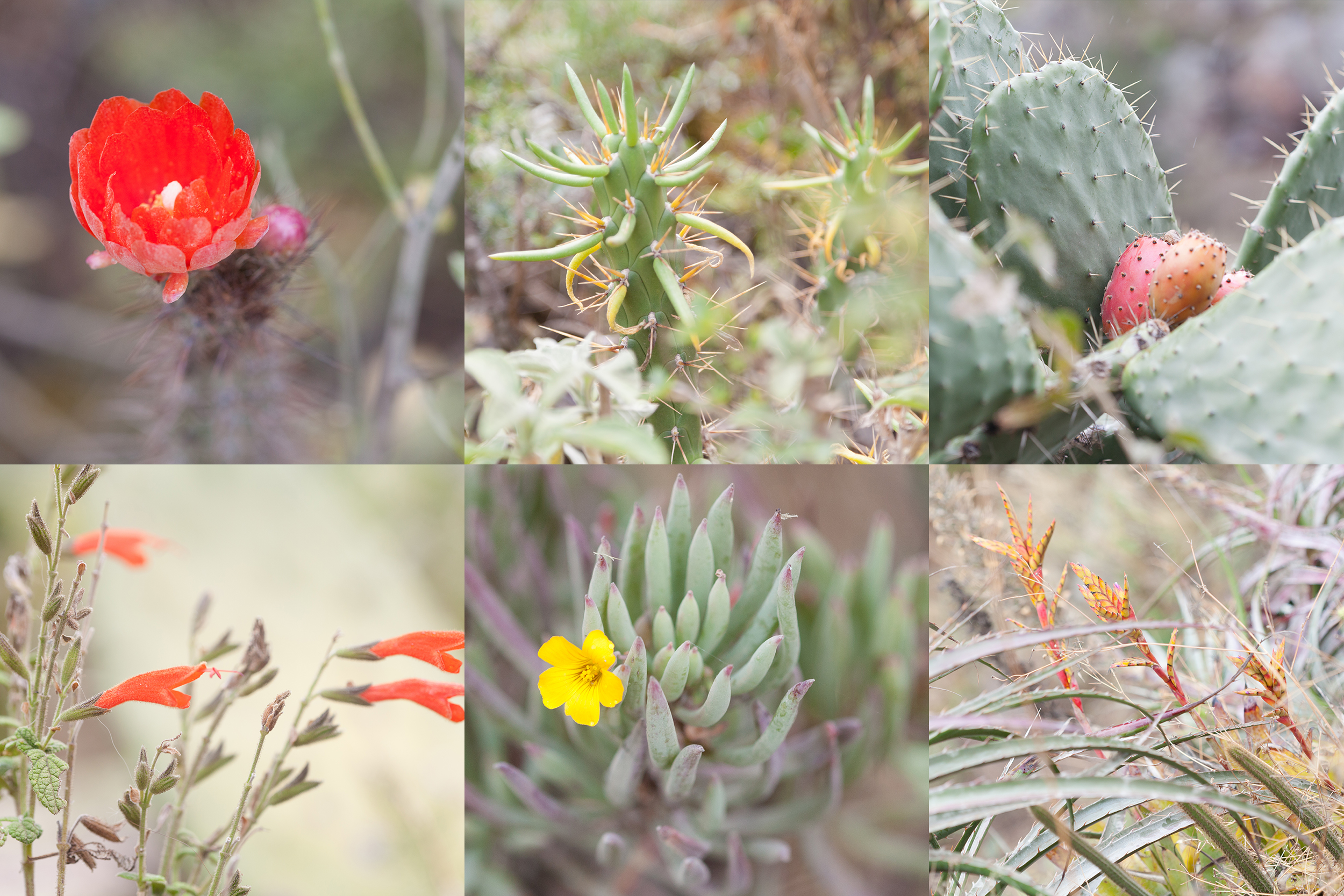 plants day one Inca trail.jpg
