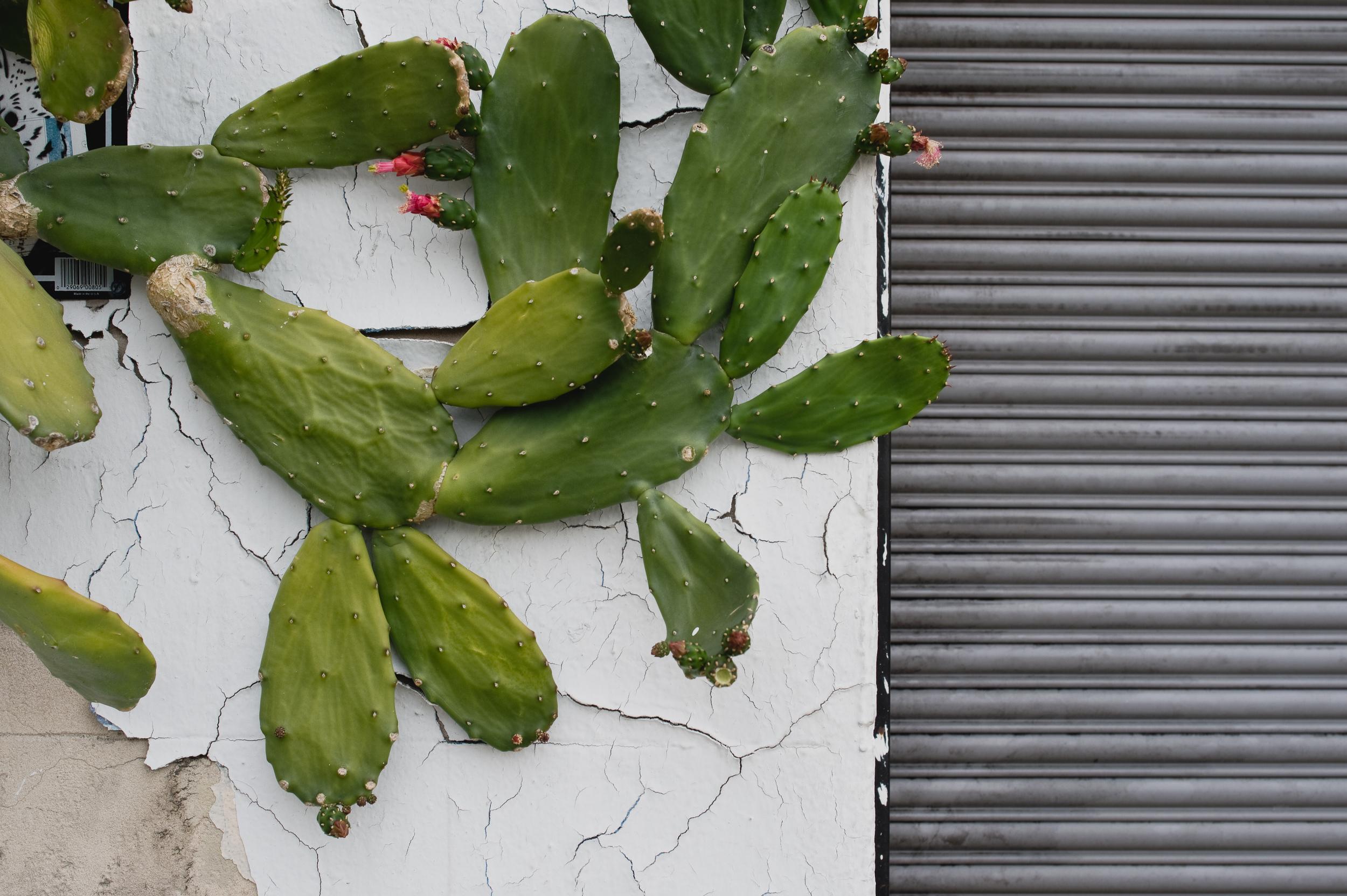 native plants-002.jpg