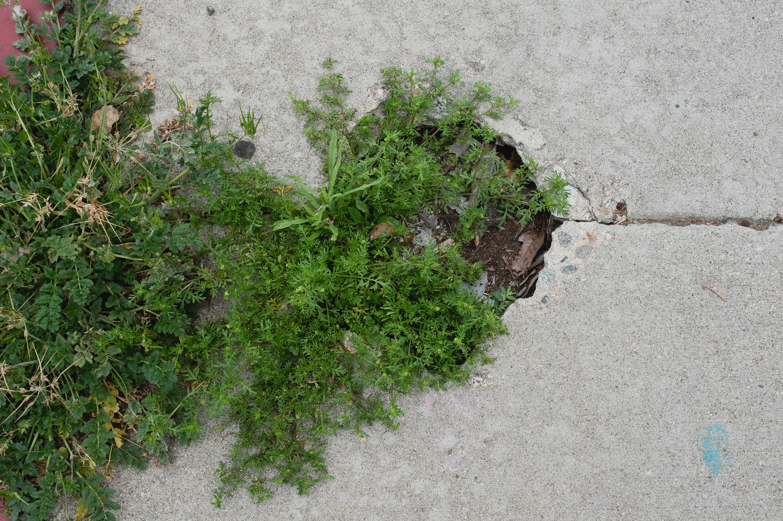 native plants-012.jpg