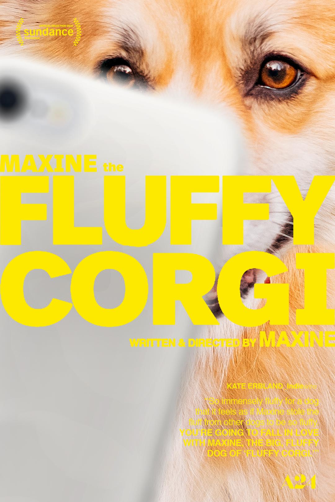 08_FluffyCorgi.jpg