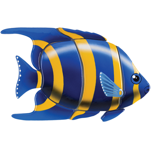 Angelfish (Blue)