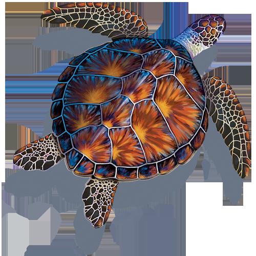 Brown Turtle w/sh
