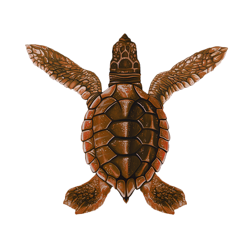 Baby Turtle A - Brown