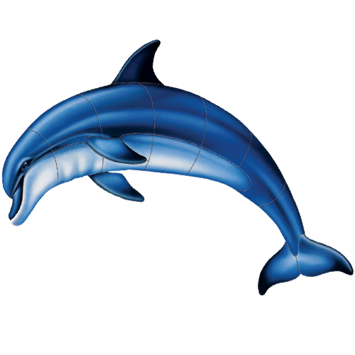 Bottlenose Dolphin A