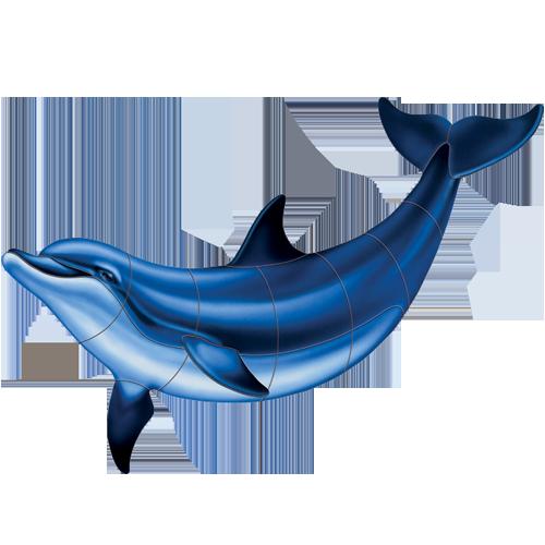 Bottlenose Dolphin B