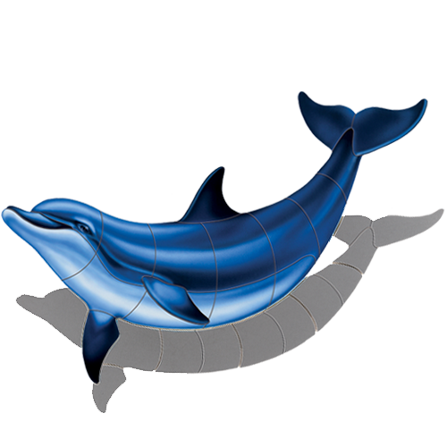 Bottlenose Dolphin B w/sh