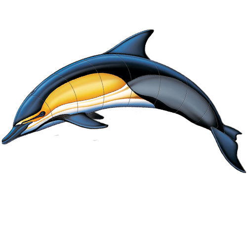 Common Dolphin A