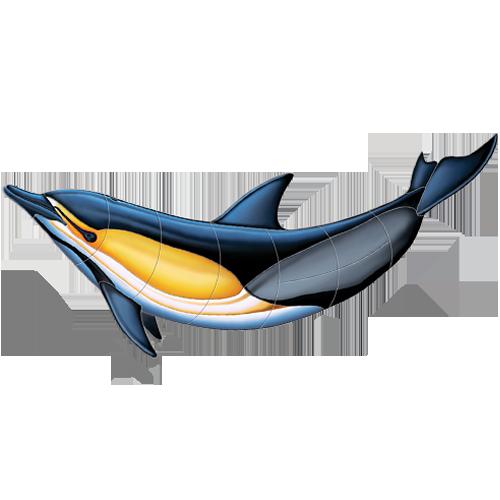 Common Dolphin B