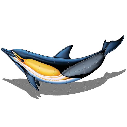 Common Dolphin B w/sh