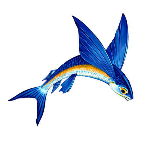 Flying Fish A