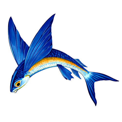 Flying Fish A Reverse