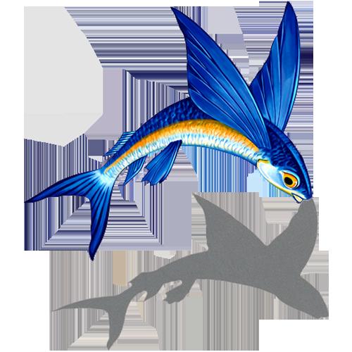 Flying Fish A w/sh