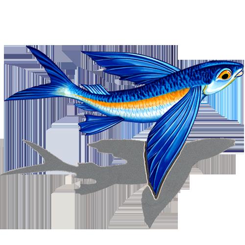 Flying Fish B