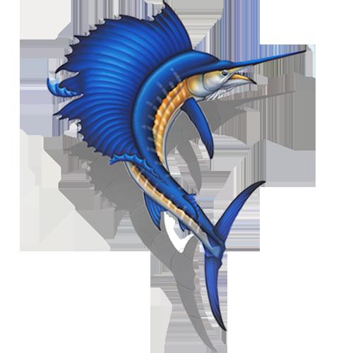 Sailfish w/sh