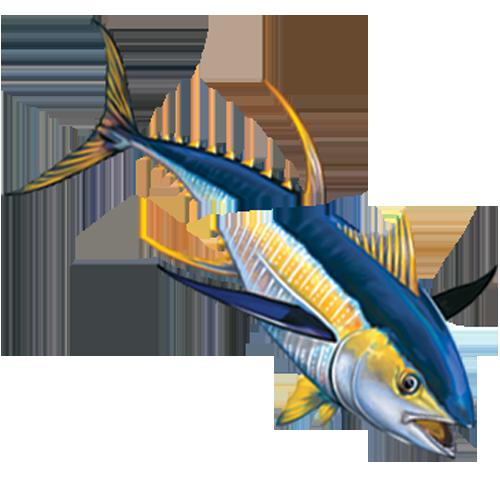 Tuna with Split