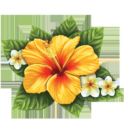 Hibiscus Flower (Single)