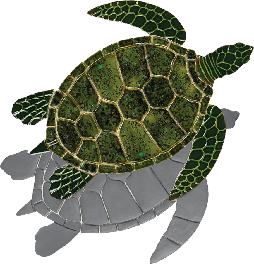 GT7-SH  Green Sea Turtle (with shadow) copy.png