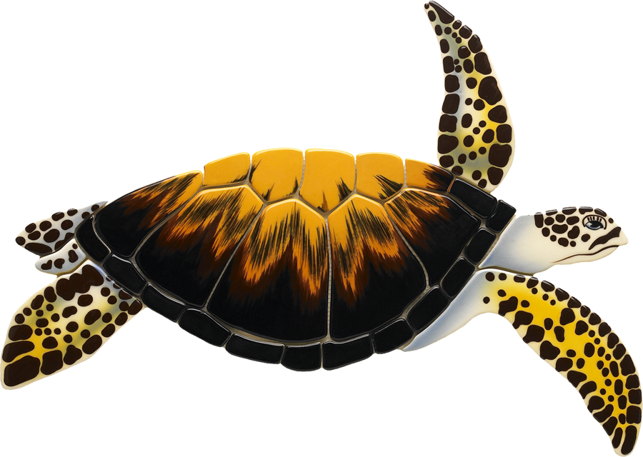 LT8  Loggerhead Turtle copy.png