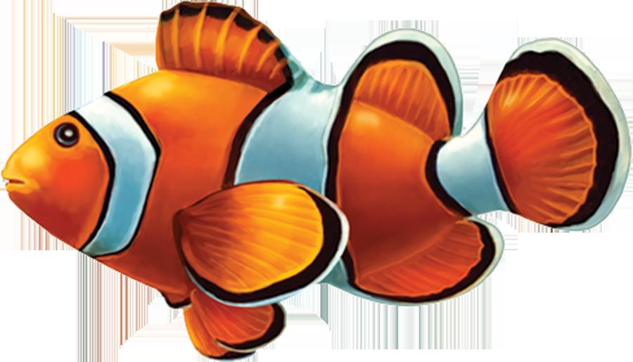 PORC-CL58  Clown Fish copy.png