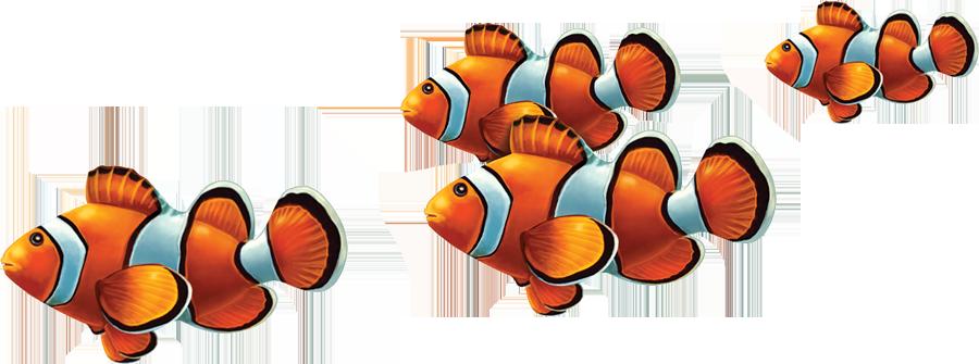 PORC-CL58 Clown Fish Group copy.png