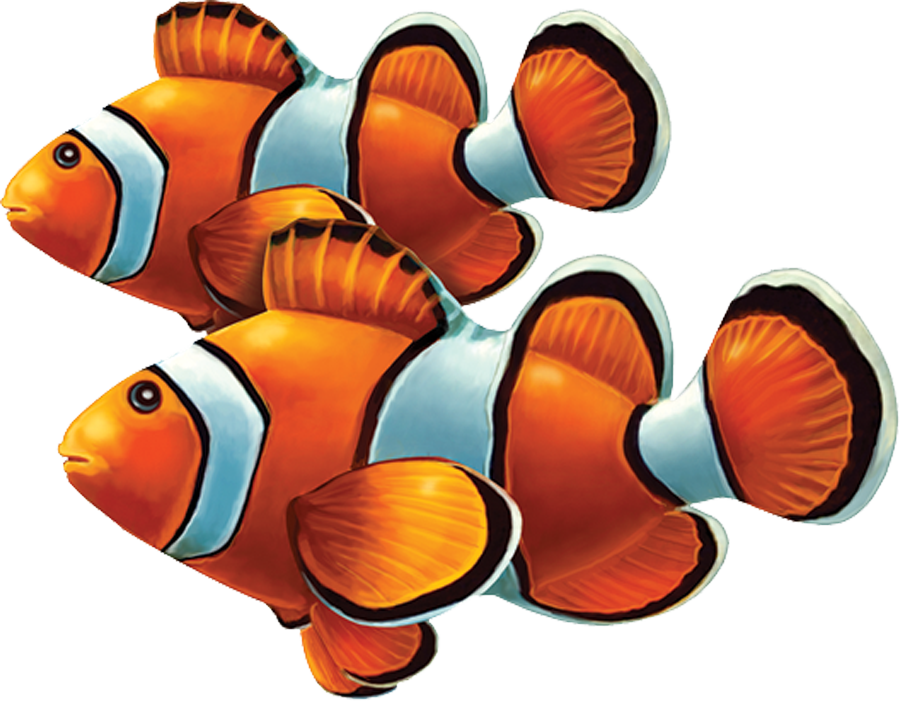 PORC-CL58D  Clown Fish Double copy.png