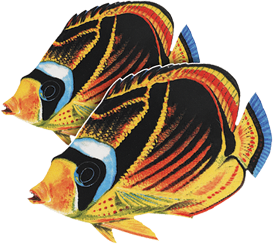 PORC-BF23D  Raccoon Butterflyfish Double.png