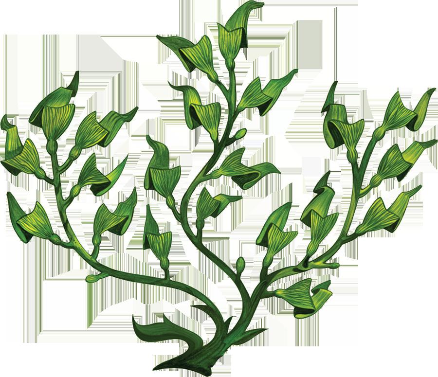 PORC-SG54  Sea Grass copy.png