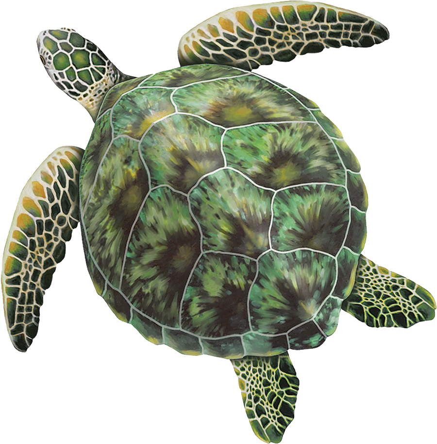 PORC-GT3  Green Sea Turtle copy.png