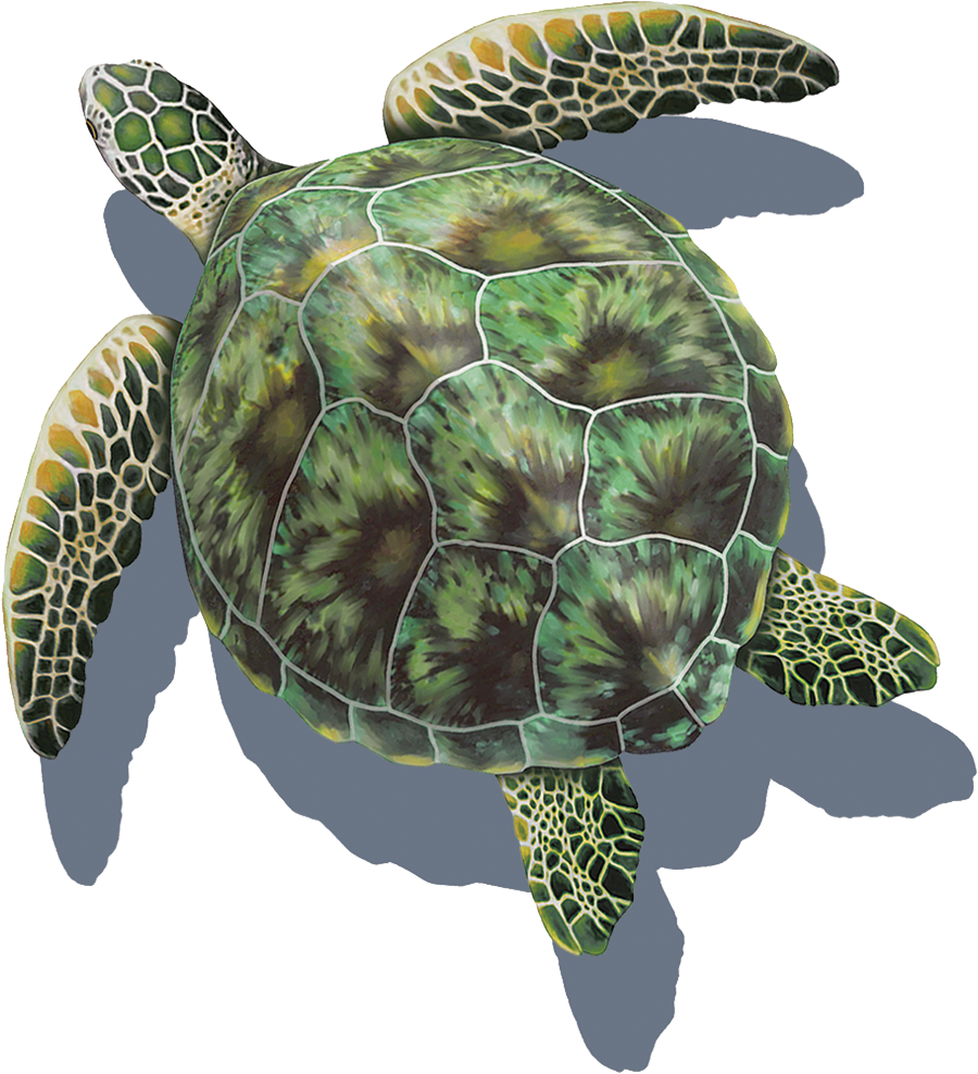 PORC-GT3-SH  Green Sea Turtle (with shadow) copy.png