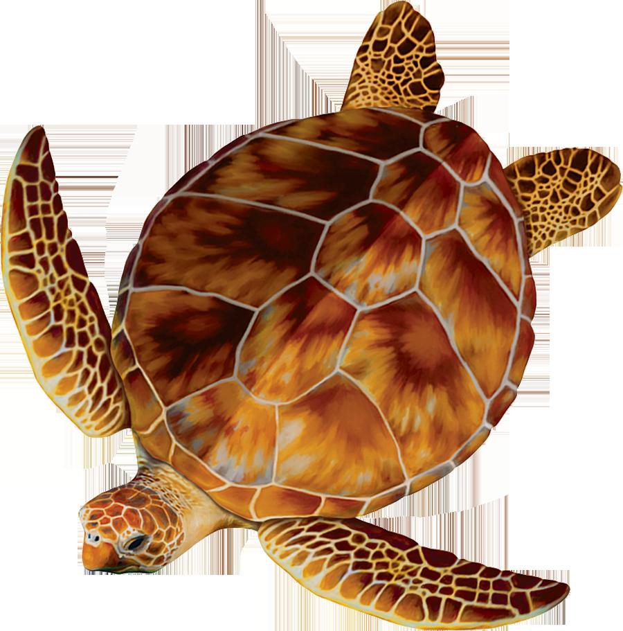 PORC-LT4  Loggerhead Turtle copy.png