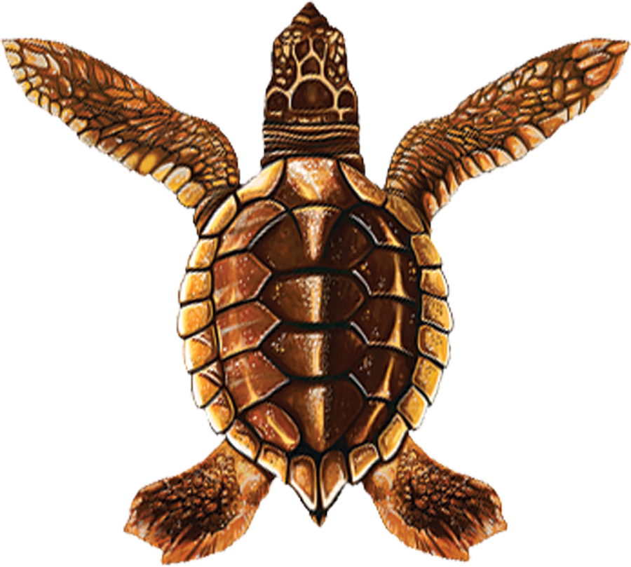 PORC-ST20A-BR  Baby Turtle A (brown) copy.png
