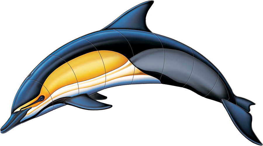 PORC-CD50 Common Dolphin-A copy.png