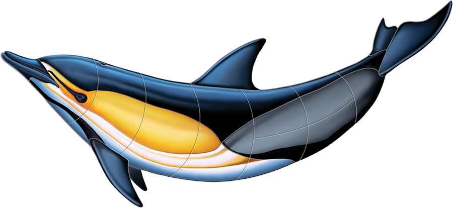 PORC-CD51  Commonn Dolphin-B copy.png