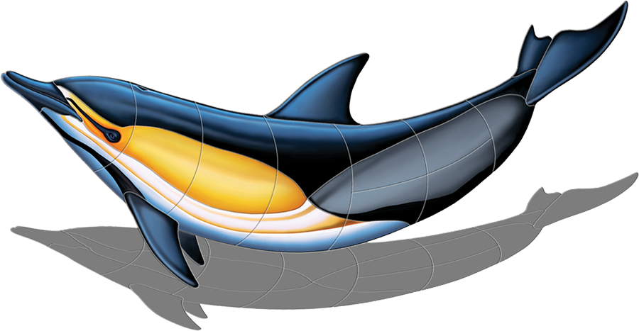 PORC-CD51-SH  Commonn Dolphin-B (with shadow) copy.png