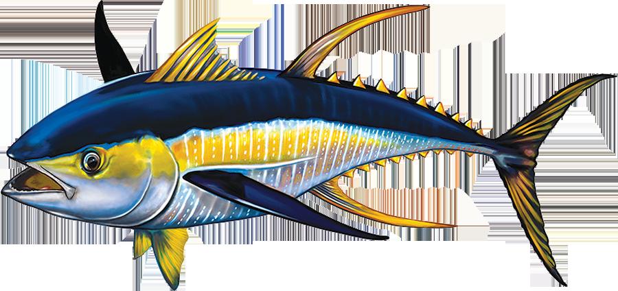 PORC-TN42R  Tuna (reverse) copy.png